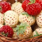 Pineberry, nuevo tipo de 'fresa blanca'